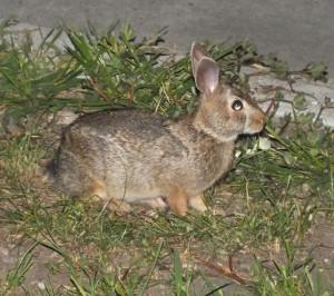 20130801 Rabbit
