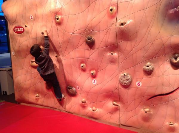 Bangii climbing skin wall, OMSI 12/28/12