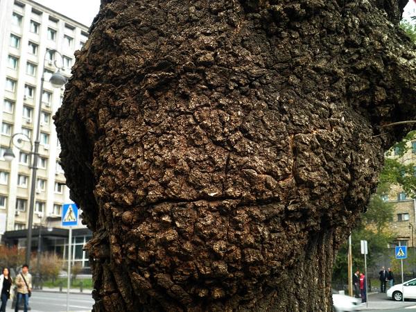 взгляд старого дерева