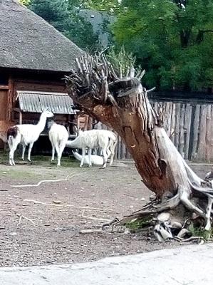 Странная тварь в зоопарке.jpg