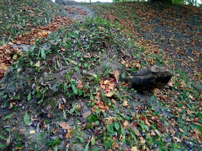 Земляная черепаха.jpg