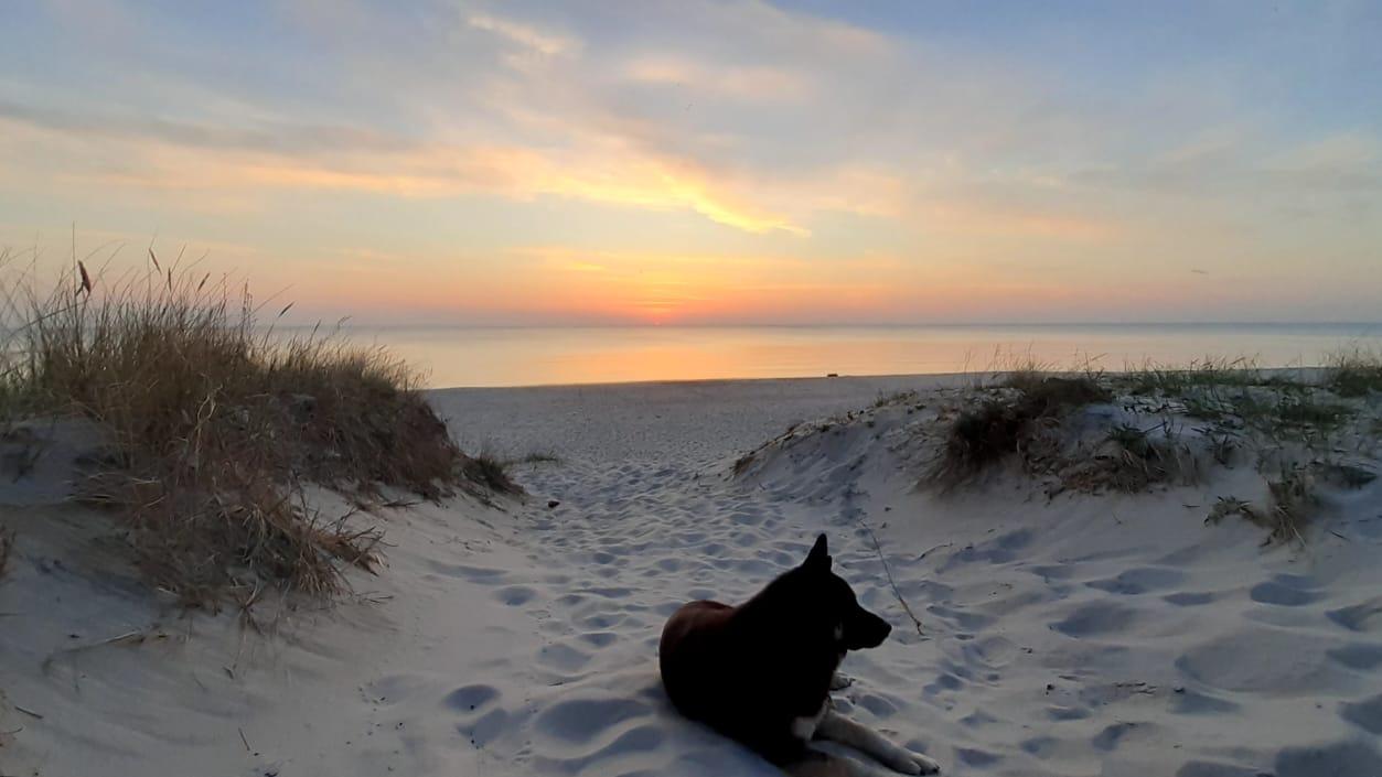 Море, дюны, закат и пёс Персик