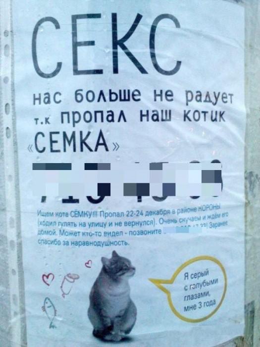 Скорей бы домой к коту