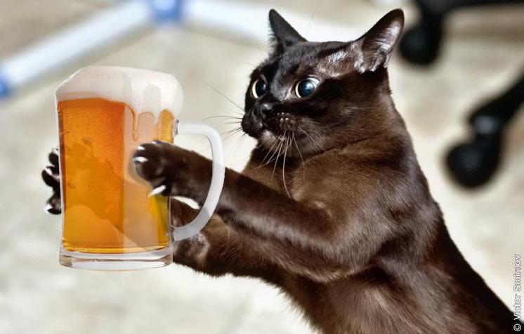 Кот и пиво