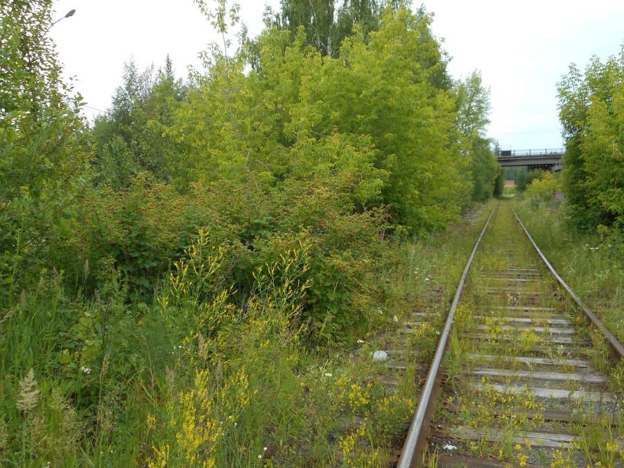 Куст у железной дороги.jpg