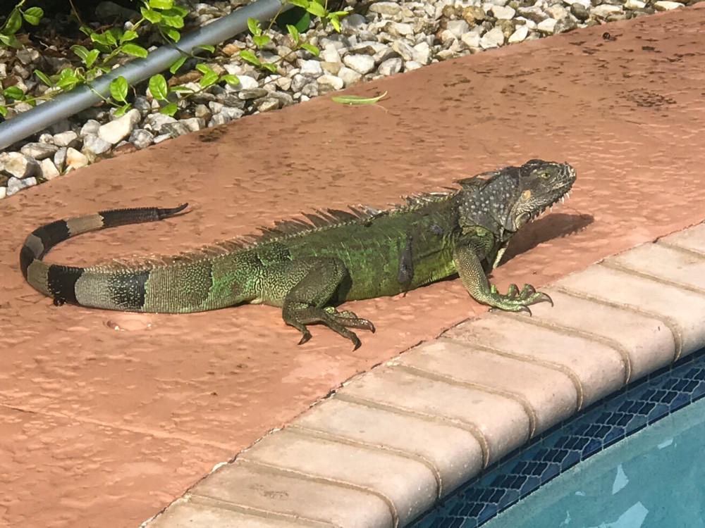 Гость у моего бассейна.