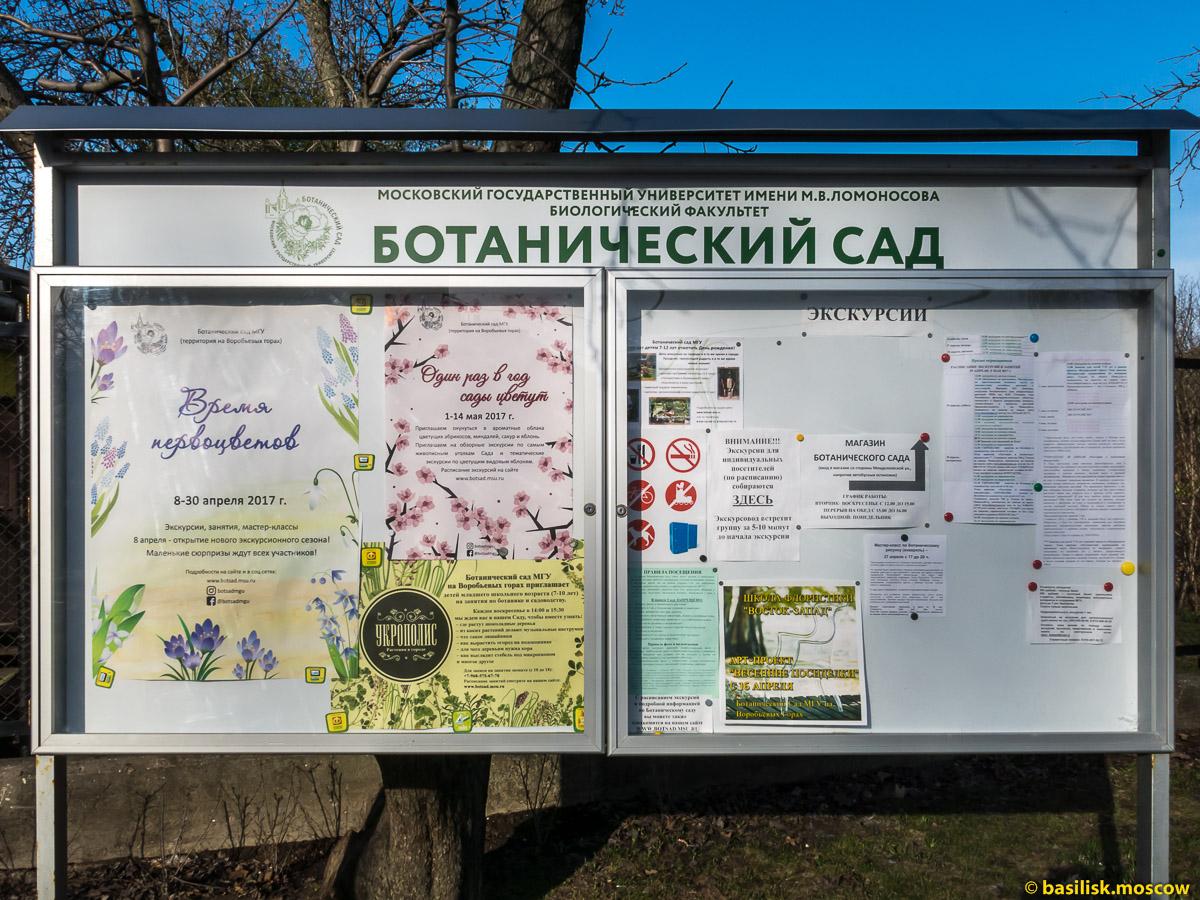 Первоцветы. Ботанический сад МГУ на Воробьёвых горах. Москва. Апрель 2017