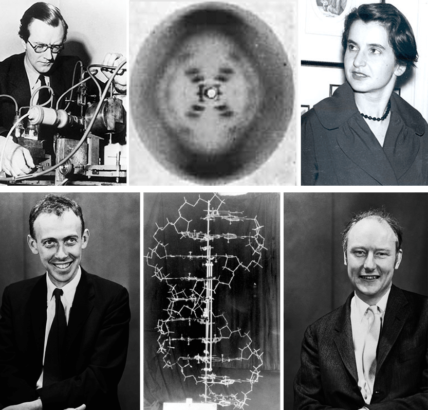 1953-04-25.DNA.png