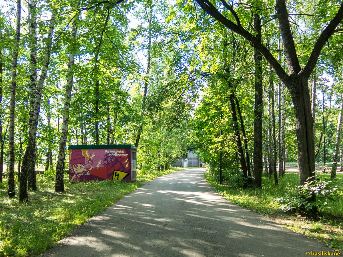 Аллеи Нескучного сада. Нескучный сад. Москва. Июнь 2018