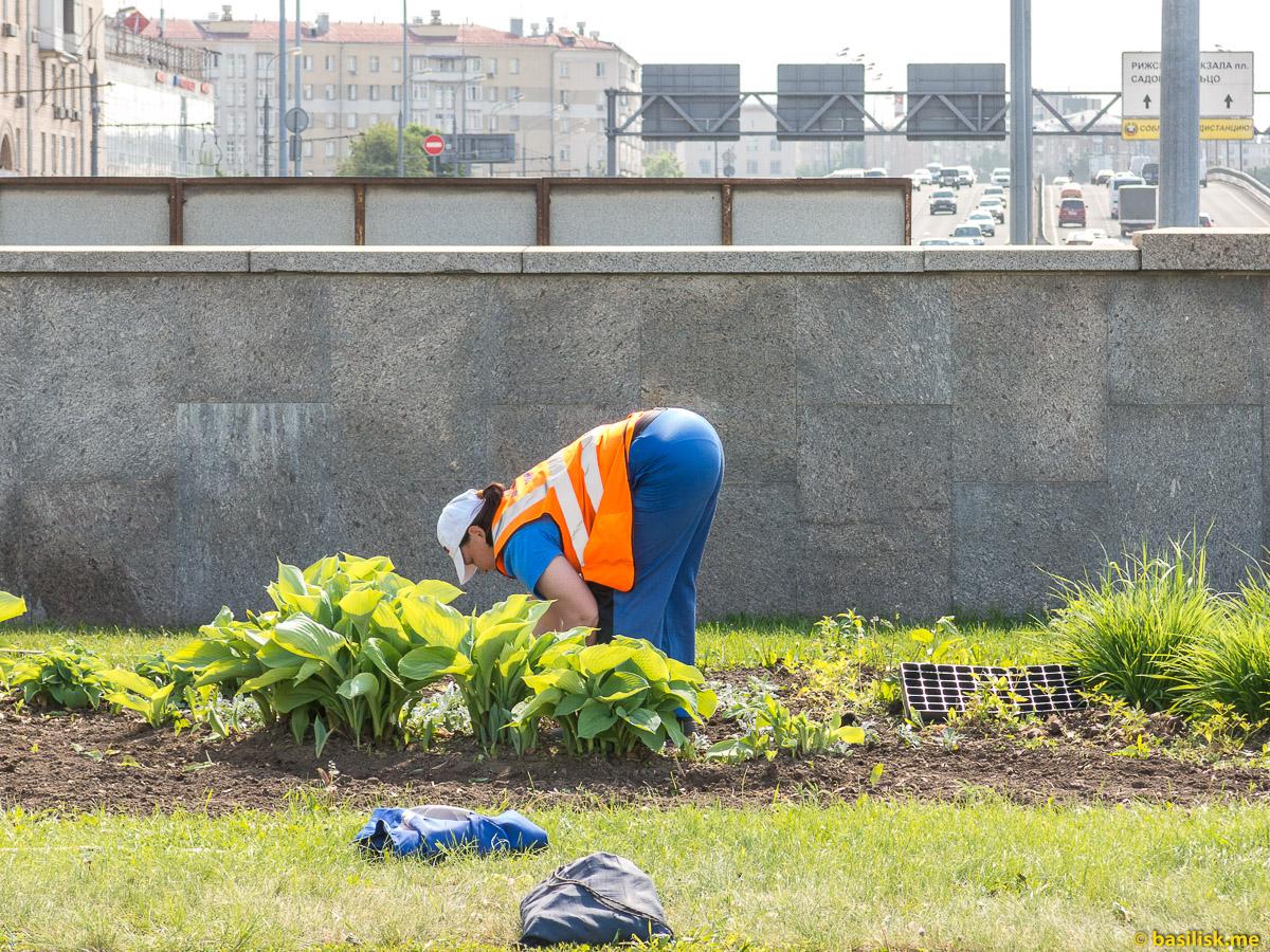 Сажают цветы. Проспект Мира. ВДНХ. Москва. Май 2018