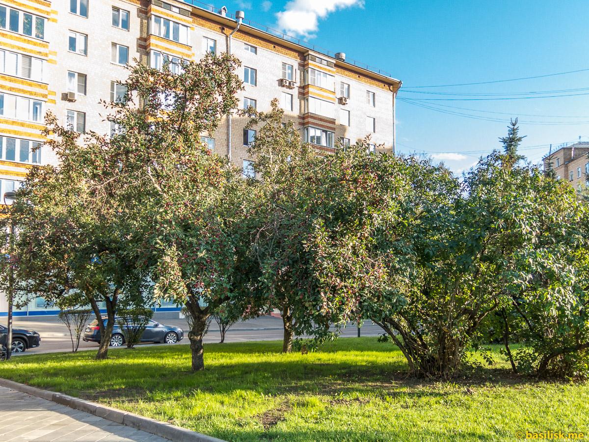 Небольшой сквер на улице Трофимова. Москва. Август 2018