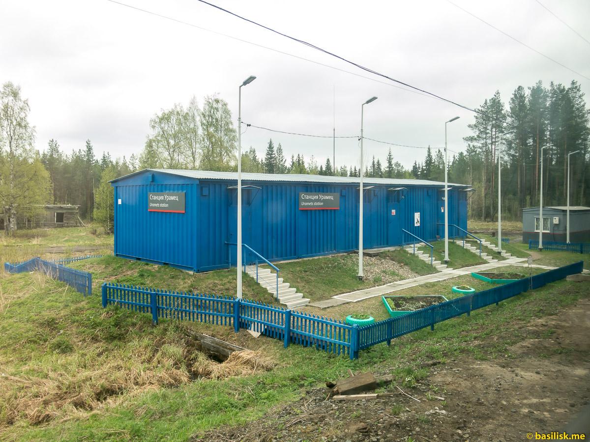 Станция Урамец. Поезд 6513 Вонгуда - Обозерская. Архангельская область. Май 2018