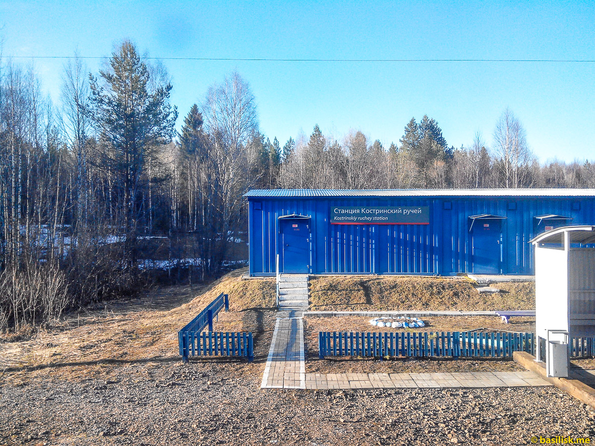 Станция Костринский ручей. Поезд 6532 Обозерская - Онега. Архангельская область. Май 2018