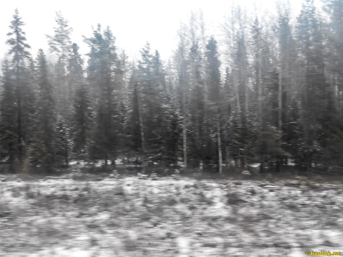 Зима за окном вагона. Архангельская область. Май 2018