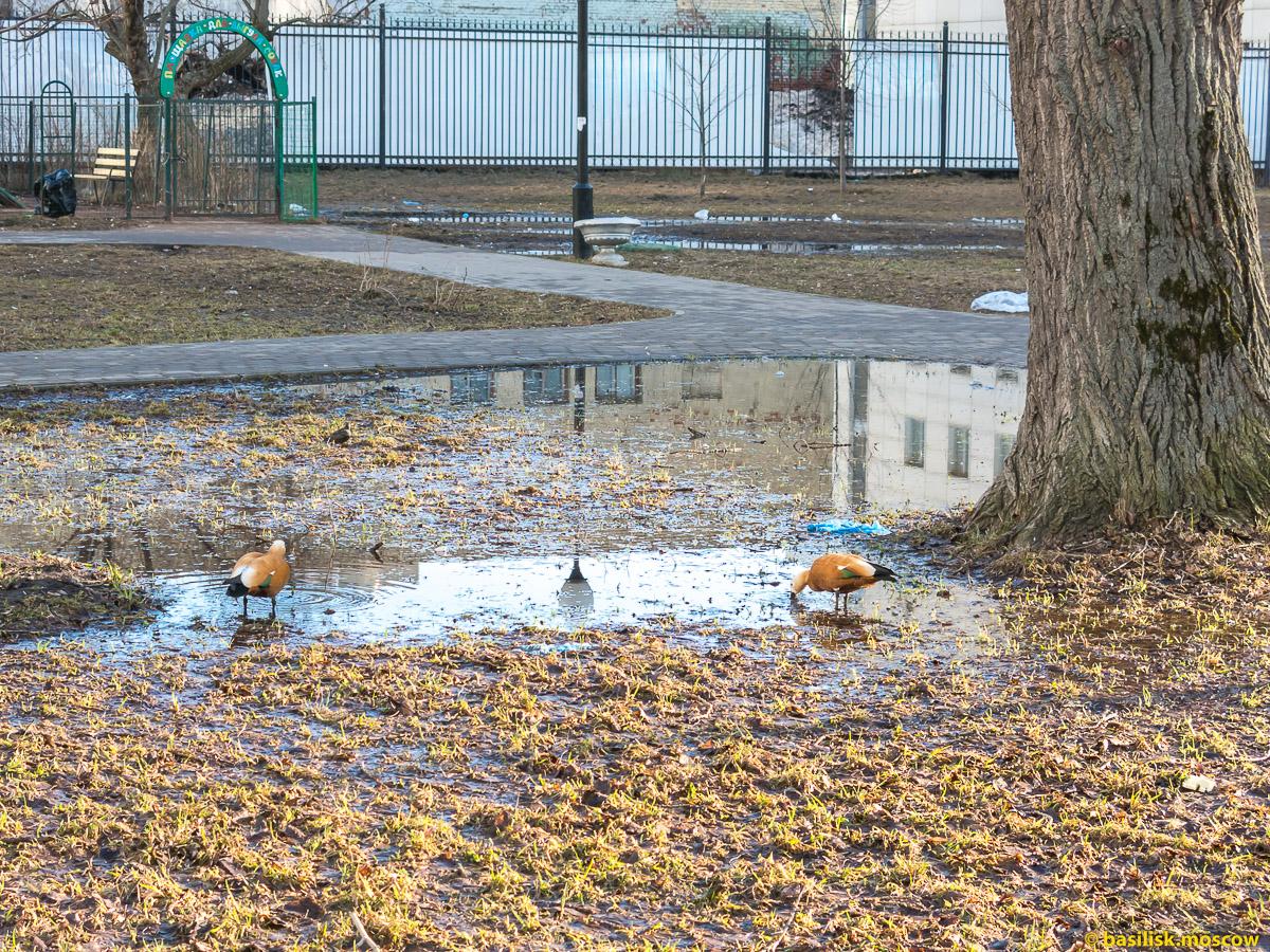 Лужи, люди и утки в сквере на Вятской. Москва. Апрель 2018