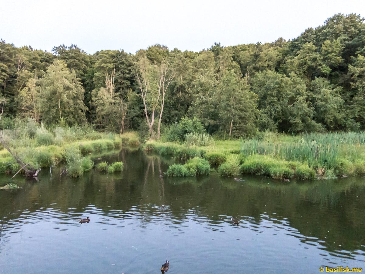 Река Химка. Москва. Август 2018