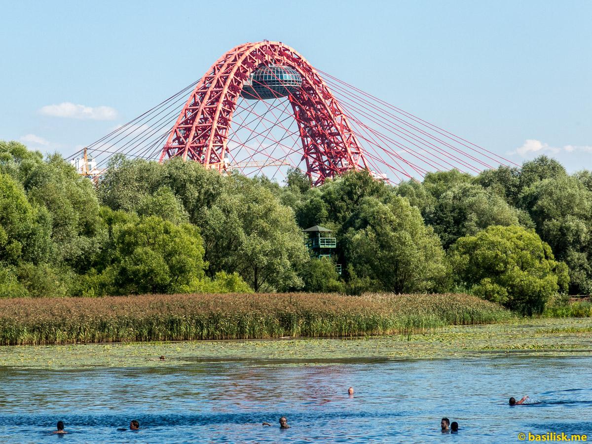 Живописный мост. Лесопарк-остров Серебряный Бор. Москва. Август 2018