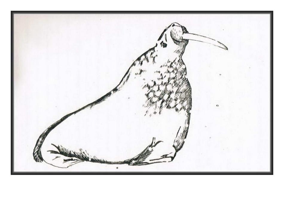 рисунок моржа