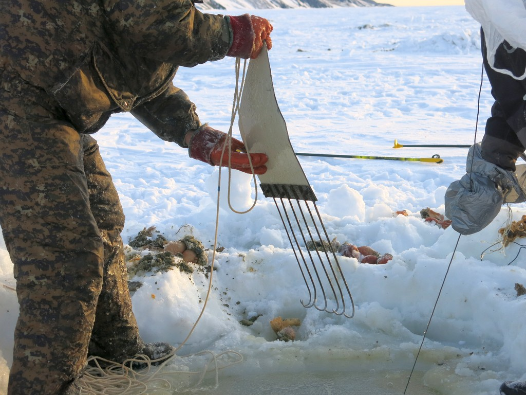 орудия лова планктона фото щимятся углам или