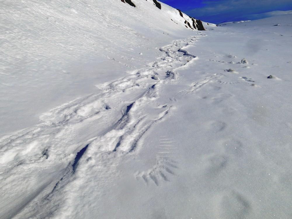 рецепт очень следы росомахи на снегу фото составит