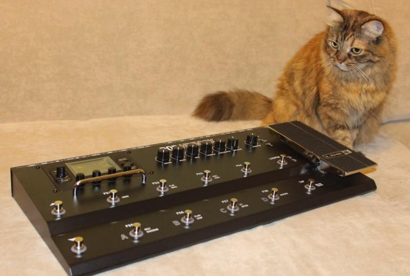 Кошка-металлистка.jpg
