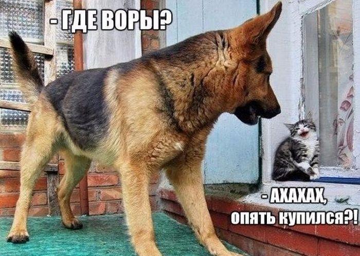 1433453316_podborka_34