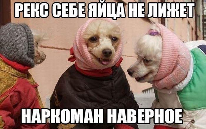 1436221475_podborka_77