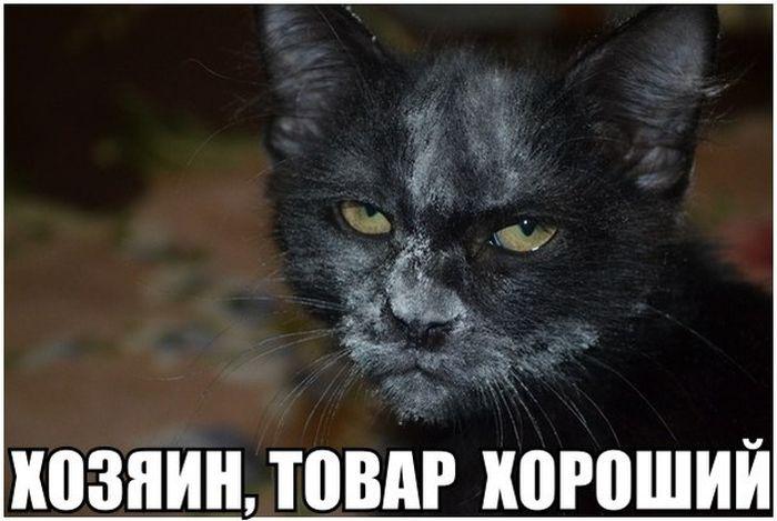 1436221495_podborka_38
