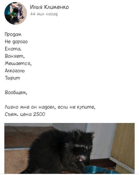 1438637474_podborka_38