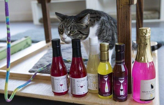 cat-dog-alcohol-novate1