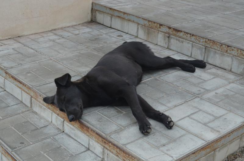 Кинешма 06 пёс.JPG