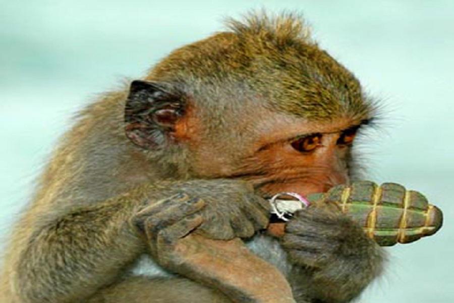 обезьяна с гранатой.jpg