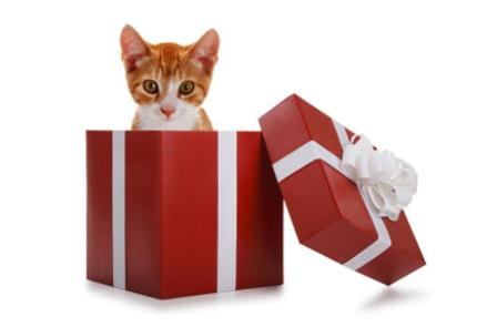 акция иль де боте бесплатно котенок