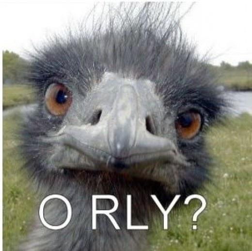 Чем полезно масло страуса эму?