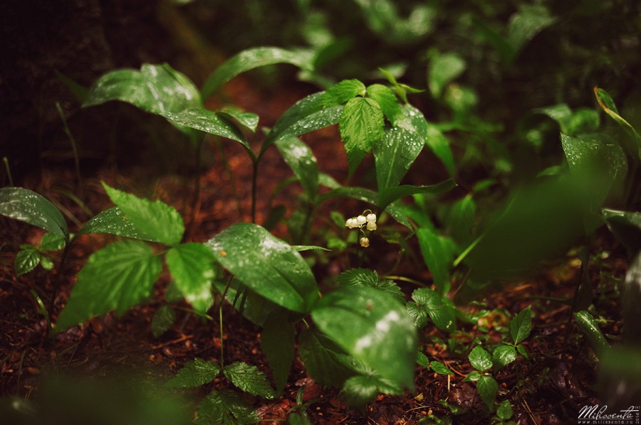 01_Forest_Rain_w