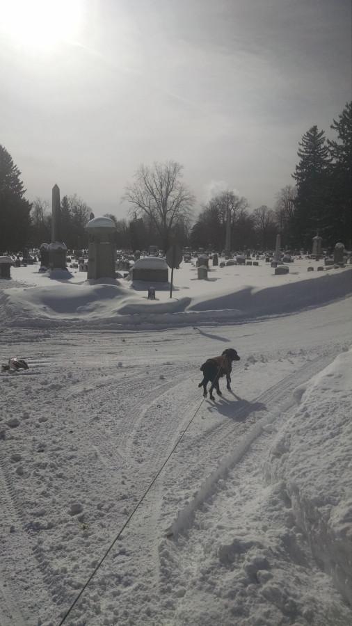 Wiwinter graveyard 3