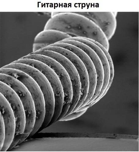 Под микроскопом1