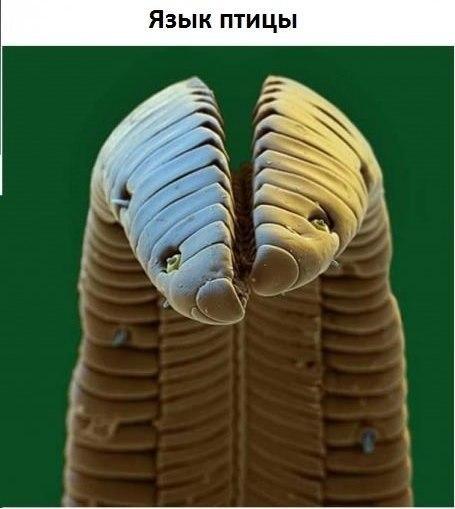 Под микроскопом3