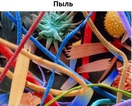 Под микроскопом5