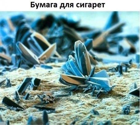 Под микроскопом9