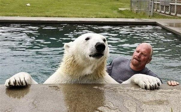 Дружба с белым медведем1