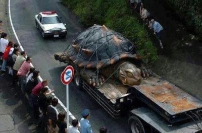 Самая крупная черепаха в мире