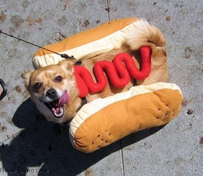 dog-costumes-5