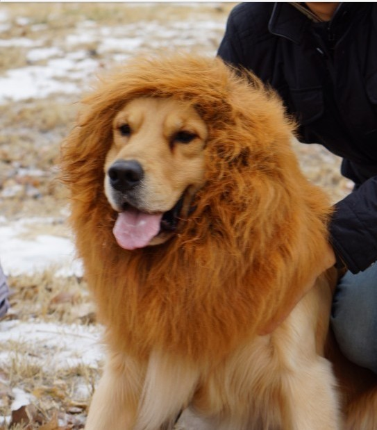 Бесплатная-доставка-Pet-костюмам-Большой-собак-Pet-Lion-Парики-Мане-фестиваль-волос-партия-Необычные-платья-Костюм