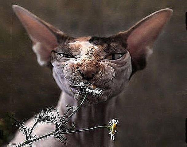 4648555-R3L8T8D-650-090712_2208_CatsWithRid8.jpg