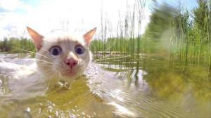 Когда плаваешь и что-то задевает твою ногу.jpg