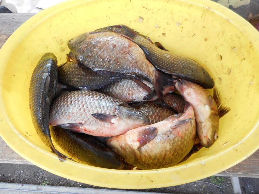 Рыба 2015 07 26 (4).JPG