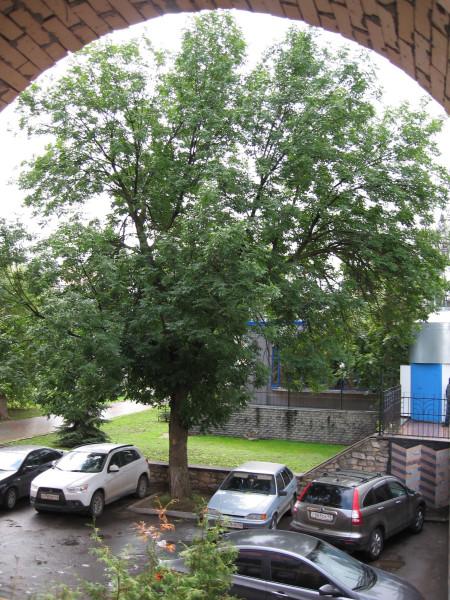 Дерево и город.JPG