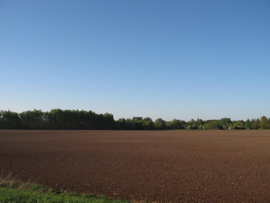 2018 05 21 Тушка поле (1).JPG