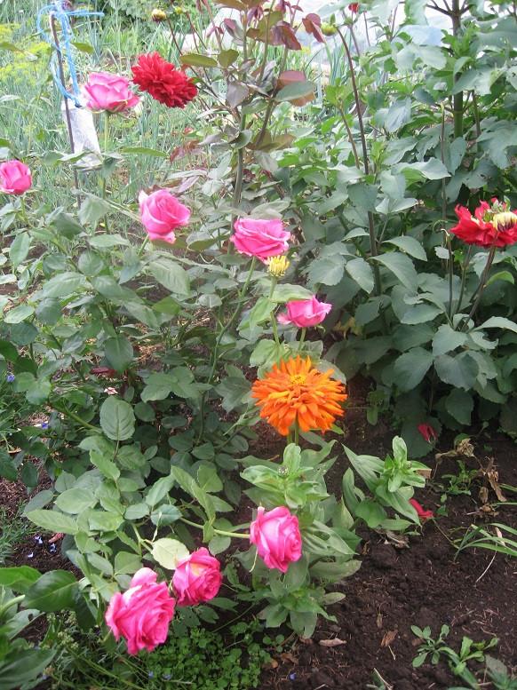Цветы тёщины (2)